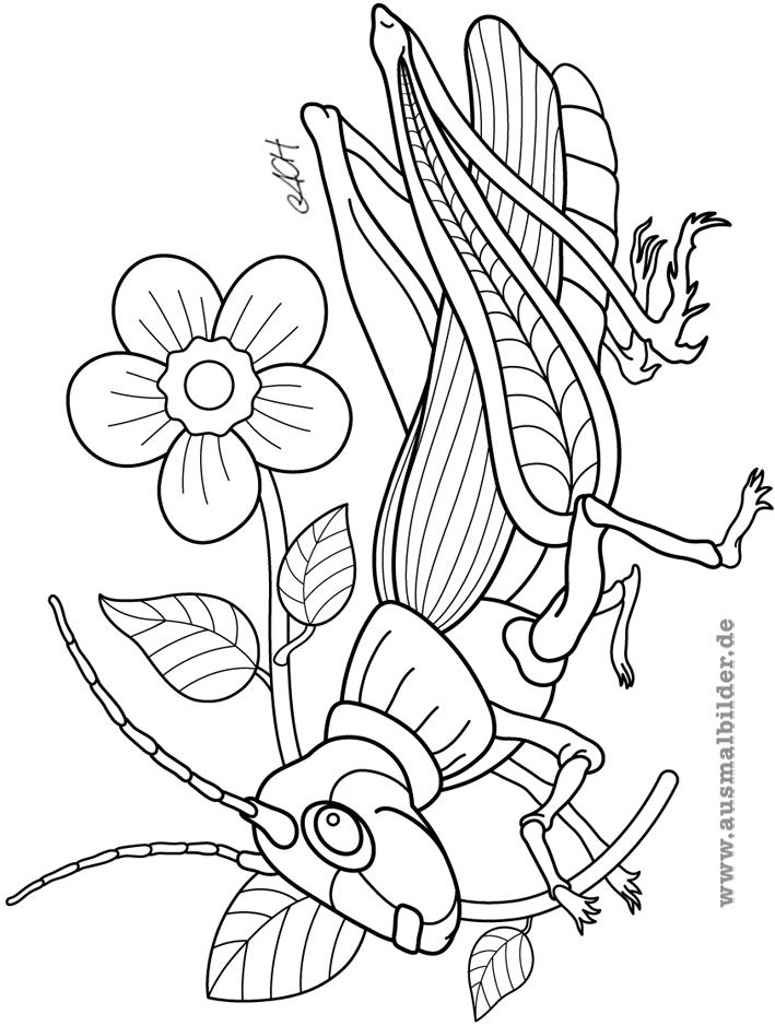 Libellen und Libellenflgel zeichnen